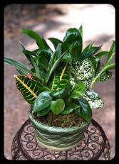"8"" Ceramic Dish Garden"