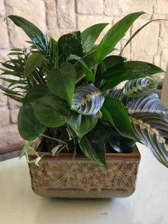 "10"" Ceramic Dish Garden Mix of Green Plants"