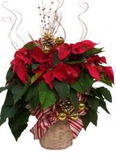 """8"""" Decorated Poinsettia"""