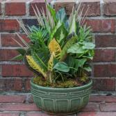 Small Ceramic Dish Garden Plant