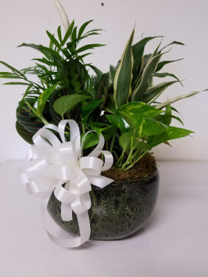 "8"" Dish garden Plant in Bryson City, NC 