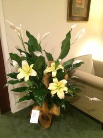 """8"""" Peace Lily in Fleur de Lis Copper Pot Green Plant"""
