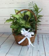 "8"" Wicker Dish Garden W/ Bow"