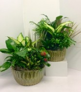 "9"" or 12"" Ceramic Dish Garden Green Plants"