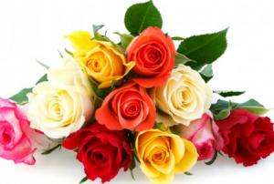 1 Dozen Color Roses  in Fort Wayne, IN | THE FLOWER SHOP