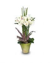 SPRING TOPIARY Flower Pot