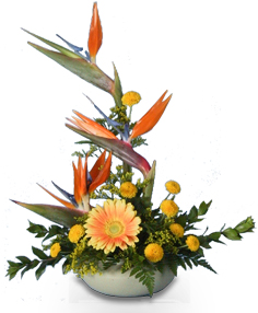 TROPICAL TRIBUTE Father's Day Flowers