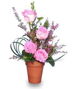 GRACE UNDER PRESSURE Appreciation Pink Roses