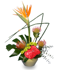 TROPICAL SHOW STOPPER Floral Arrangement in Calgary, AB | BEST OF BUDS