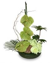 SEA OF GREEN Floral Arrangement