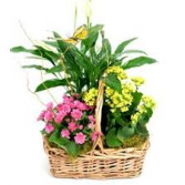 A Blush of Nature Green and Blooming Plant Basket