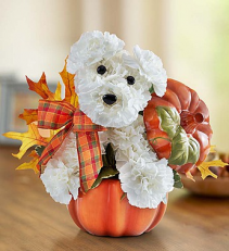 a-DOG-able® Fall Pumpkin Arrangement