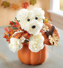 A Dog Able For Fall