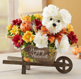 a-DOG-able® for Fall Arrangement