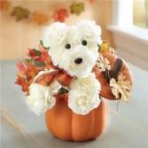 A-Dog-Able for Fall Pumpkin Fall Arrangement