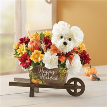 A-Dog-Able for Fall Wheelbarrow Fall Arrangement