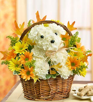 a-DOG-able™ for Fall Willow Basket Arrangement in Croton On Hudson, NY | Cooke's Little Shoppe Of Flowers