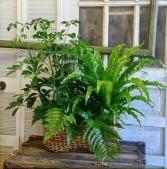 Green Garden European Garden Basket