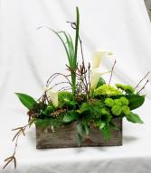 A Frog's Life Fresh Floral Design