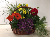 A Gardener's Delight! Individual annuals to plant