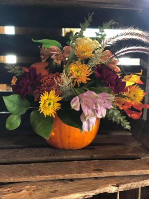 A Light up Pumpkin Patch  in Manistee, MI | Lavender Florals