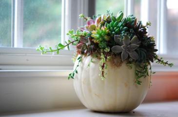 A Nature Filled Pumpkin Fall