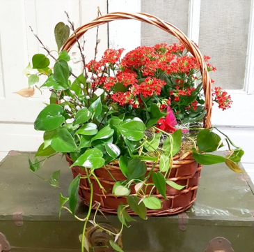 Cardinal Radiance Plant Basket