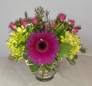 A Star is Born - VAL102 Every Day in East Templeton, MA | Valley Florist & Greenhouse