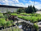 A Sunny Stroll Through The Garden A Basket of Hardy Perennials for the Sun
