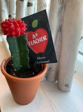 A+ Teacher Cactus Gift Plant