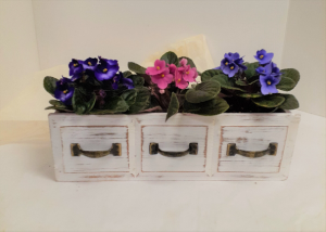A Trio of Violets  in Tottenham, ON   TOTTENHAM FLOWERS & GIFTS