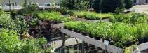 A Walk Through The Garden Basket of Hardy Perennials for the Shade
