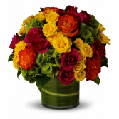 Abundant Passion Mix Roses in Pembroke Pines, Florida | J&J FLOWERS & GIFT SHOP