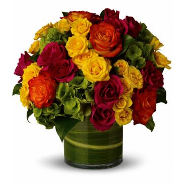 Abundant Passion Mix Roses