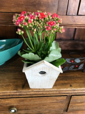 Admin. Day Special Kalanchoe Bird House