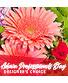 Admin Professional's Flowers Designer's Choice