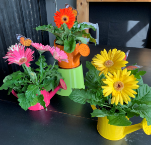 Administrative Professionals Week Special Potted Gerbera Daisy in a Watering Can in Bemidji, MN | NETZER'S FLORAL