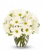 Adorable White Daises