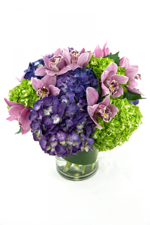 Adore Hydrangeas & Orchids  All Around in Falls Church, VA | Geno's Flowers