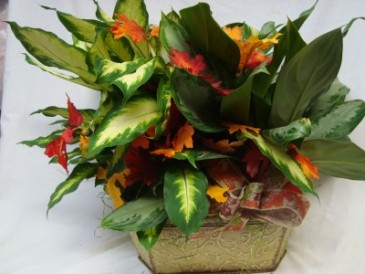 """Two 6"""" Plants in a Tin Container with fall leaves and Bow. Nice Keepsake."""