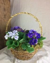African Violet Basket Dish Garden