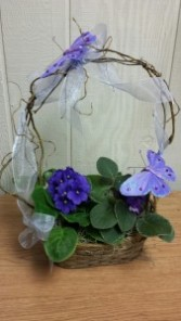 African Violet basket Plants