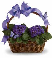 African Violets  Basket EN-2P