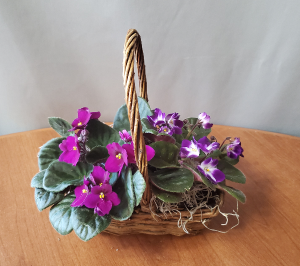 African Violet Double Basket Plant in Croton On Hudson, NY | Cooke's Little Shoppe Of Flowers