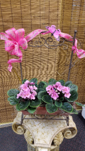 African Violet Double Planter