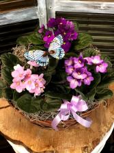 African Violet Garden