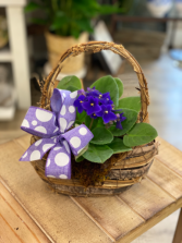 African Violet in Designer Basket