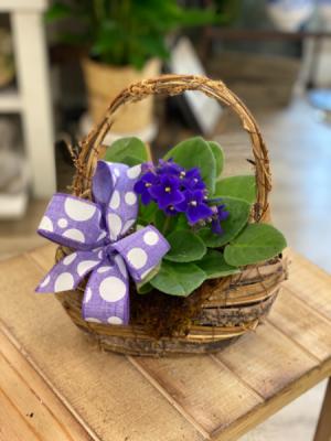 African Violet in Designer Basket  in Hermitage, TN | IN FULL BLOOM FLOWERS + GIFTS