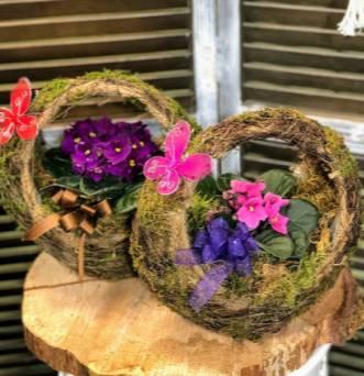 African Violet Moss Basket