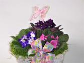 African Violet  plant basket